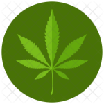 marijuana-5-789800